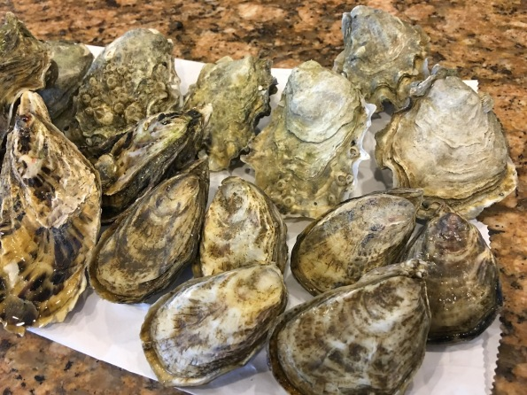 Sol  Azul, Calm Cove, Shigoku Oysters