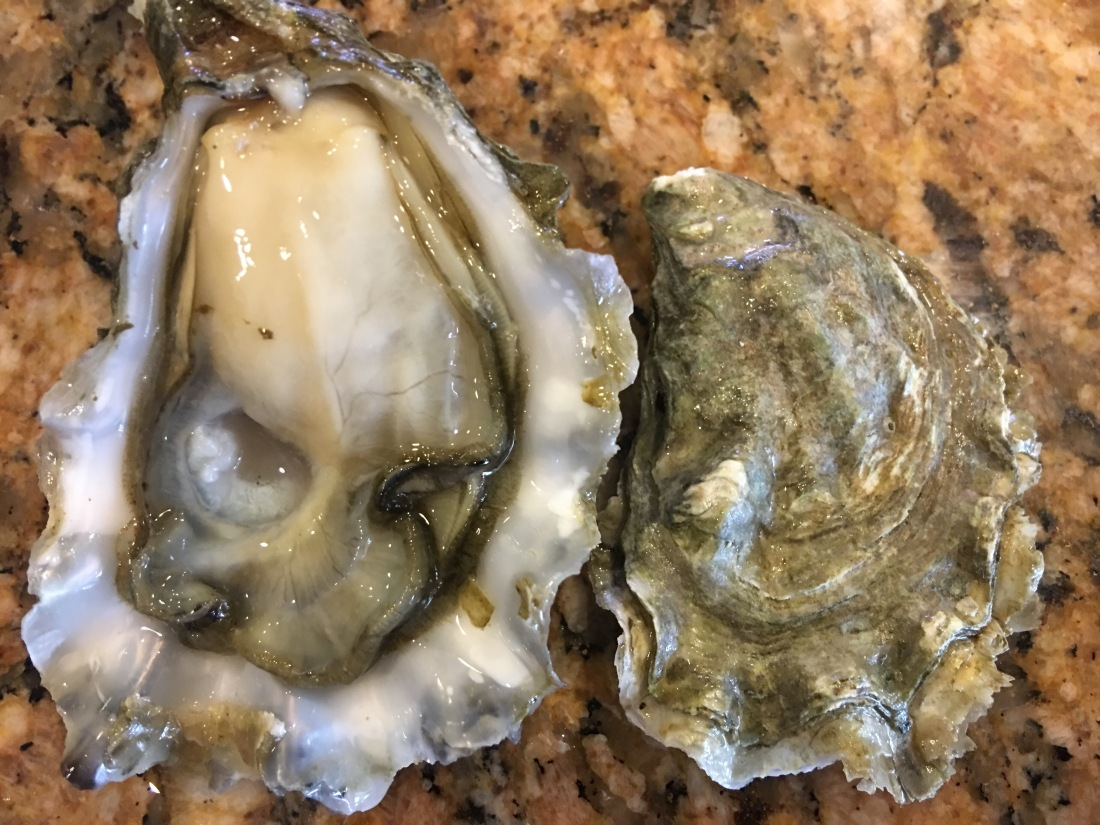 Calm Cove Oyster